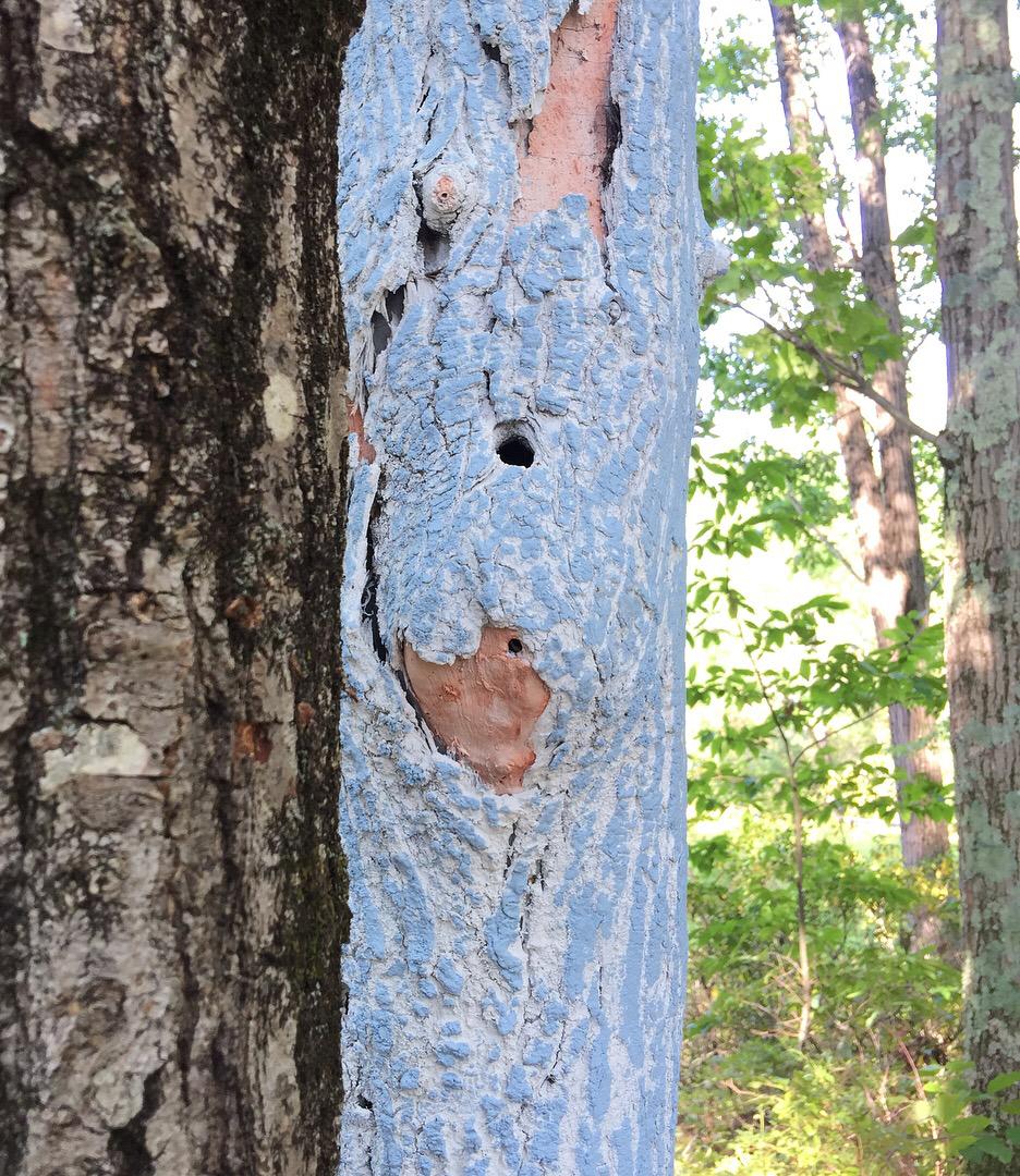 Close-up of Graft, 2017. Freedom Baird. Living oak tree, dead ash tree trunk, latex and acrylic paint, acrylic bead blanks, plywood, 4x4s, plastic sheeting, moss. Harvard, MA