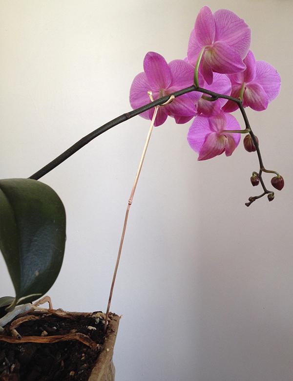 Orchid Crutch, March 24, 2014. Scrap brass. 13 x 1 x 0.2 inches - Freedom Baird