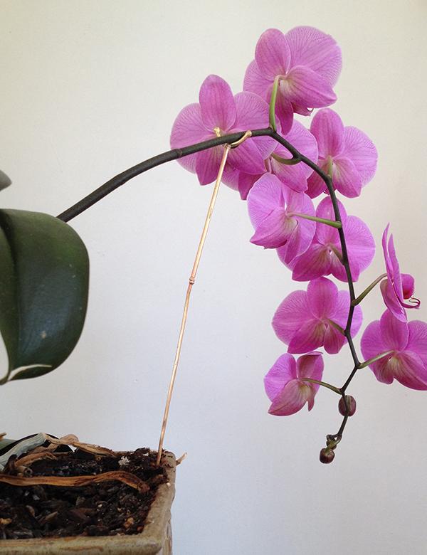 Orchid Crutch, April 16, 2014. Scrap brass. 13 x 1 x 0.2 inches - Freedom Baird